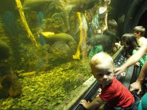 Obří akvárium Hradec Králové, Ondra byl nadšenej :-)