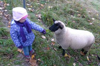 Kamarádka ovečka :)