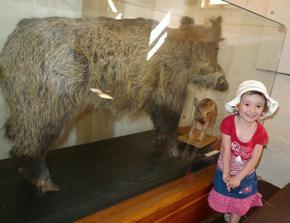 """Aničko, co je to za zvířátko? """"Peppa pig"""" :))"""