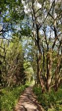 Super džungle v blízkosti města.