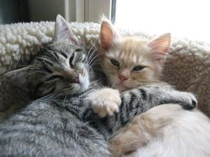 Láska nezná hranic, a opravdové přátelství trvá celý život...