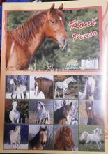 Pexeso - koně,