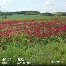 Po 14 dnech konečně opět čas na běh. Sice pomalé tempo, ale pocit a nálada je báječná.