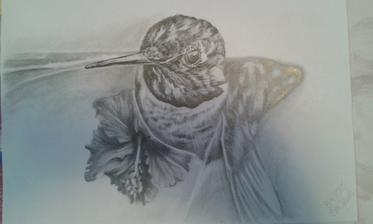 kolibřík A4_2015