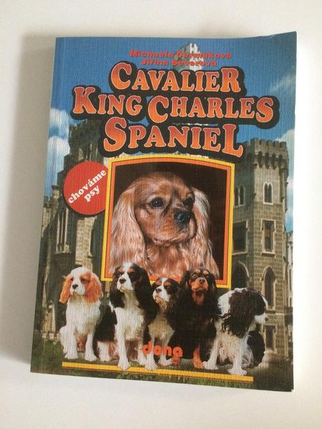 Cavalier king charles spaněl,