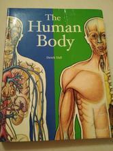 Human body,