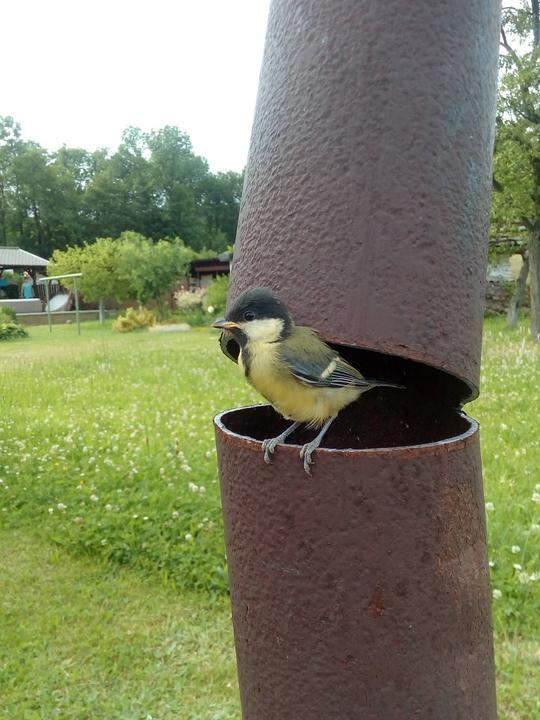 fotky pěkných ptáků