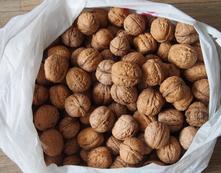 Vlašské ořechy,