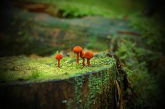 ... kouzelné houbičky