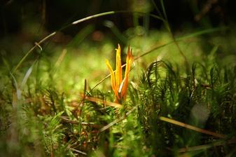 .... plamínky v trávě
