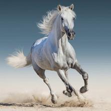 Povlak na polštářek 40x40 kůň bílý 01, 40,40