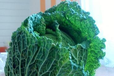 Zelené potraviny - kapusta