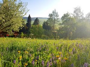 Ráno u nás na zahradě:-)