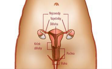 Porodní cesty
