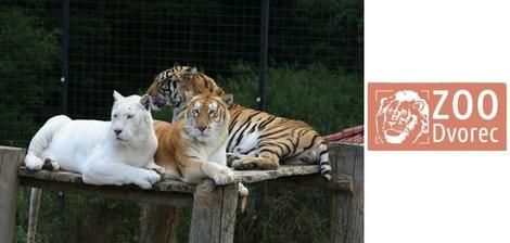 ZOO Dvorec - asi jediná zoo kde se nám nelíbilo :-( zvířata v malých klecích :-(