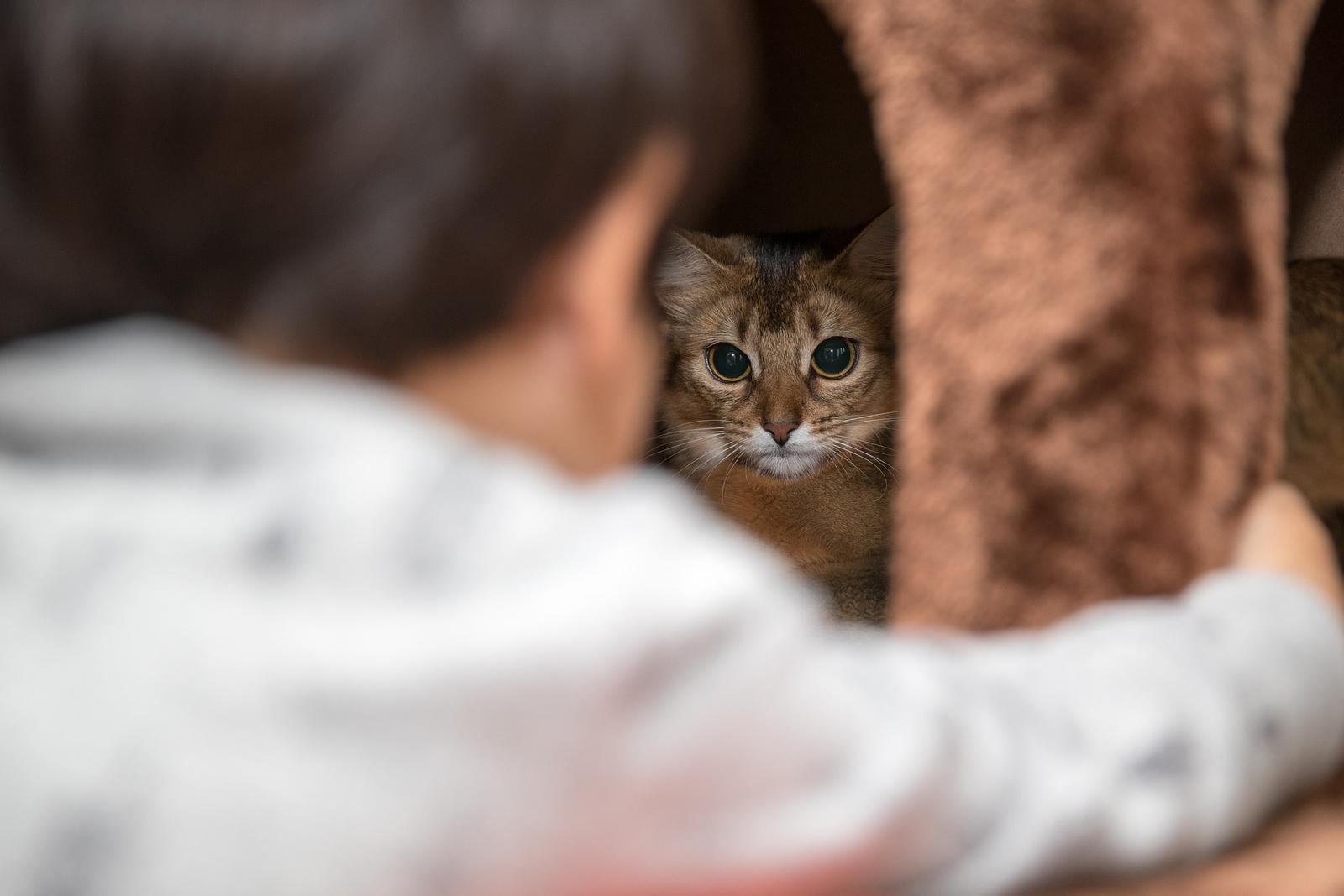 mladé čerstvé kočička fotkysex ed pro dospívající