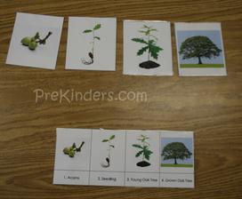 tisk! http://www.prekinders.com/2008/10/tree-life-cycle/